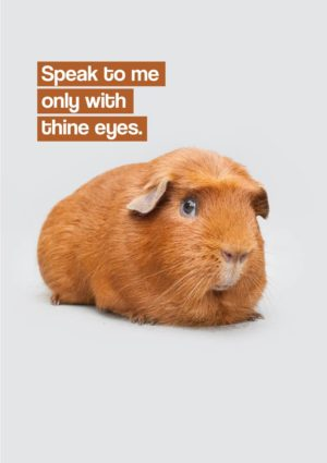 Truth Greeting Card featuring a guinea pig and text 'Speak To Me Only With Thine Eyes'