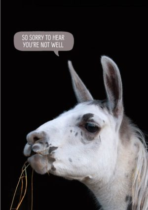A llama and a speech bubble 'Sorry To Hear You're Not Well'