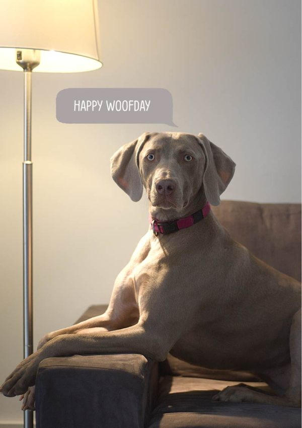 A weimaraner sitting on a settee with a standard lamp illuminating it, and a speech bubble 'Happy Woofday'