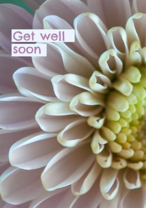 a pink chrysanthemum in closeup showing a cluster of pink florets, and text 'Get Well Soon'
