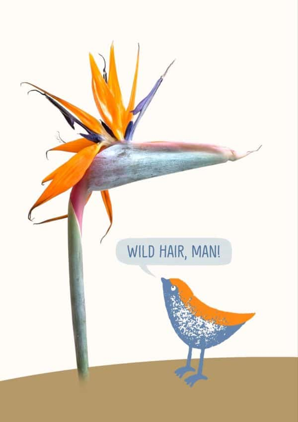 A small blue and orange bird confronting a Strelitzia or Bird Of Paradise flower, with speech bubble and text 'Wild Hair, Man!'