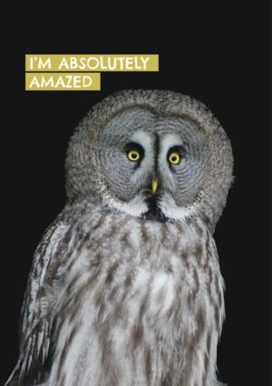 An amazed owl - at least one with a look of amazement - and text 'I'm Absolutely Amazed'