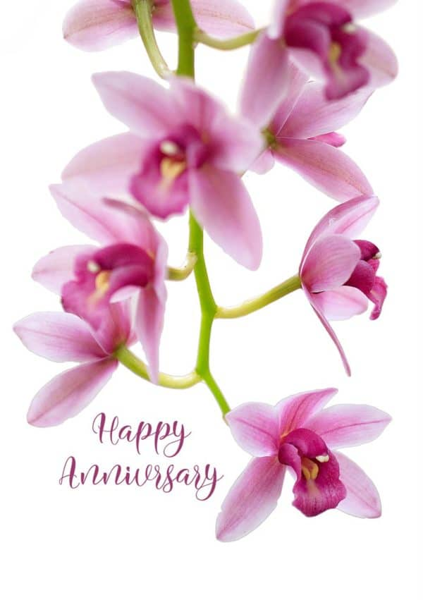 A Cymbidium or Boat Orchid trailing down the card.