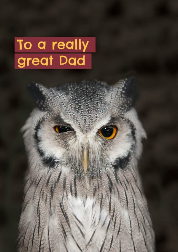 A winking owl and text 'To A Really Great Dad'