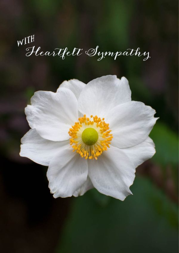 Flora - a white Japanese anemone flower and text 'With Heartfelt Sympathy'.