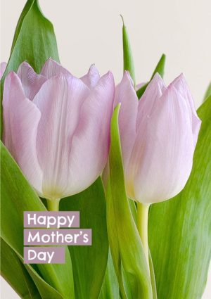 Bunches - pink tulips and text 'Happy Mother's Day'