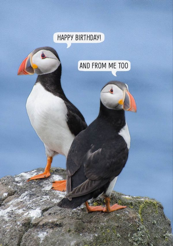 Two puffins standing on a rock with speech bubbles and one puffin saying 'Happy Birthday' and the other puffin saying 'And From Me Too'