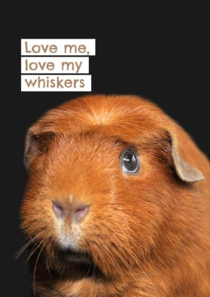 My Whiskers Guinea Pig greeting card with a close-up of a guinea pig with a crest on its forehead, set against a dark background and text 'Love Me Love My Whiskers'