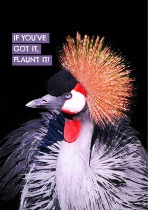 A Crowned crane in its finery with text 'If You've Got it, Flaunt It!'