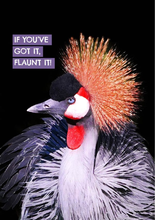 Flaunt it greeting card with a Crowned crane in its finery with text 'If You've Got it, Flaunt It!'