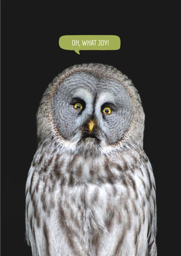 A large grey owl with a startled expression and a speech bubble with text 'Oh, What Joy'