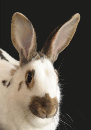A Black Eyes Greeting Card for every day featuring a bunny rabbit