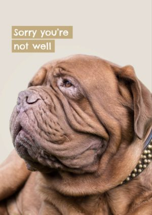 a Dogue de Bordeaux looking decidedly down in the dumps - it's a dog's life - and text 'Sorry You're Not Well'.