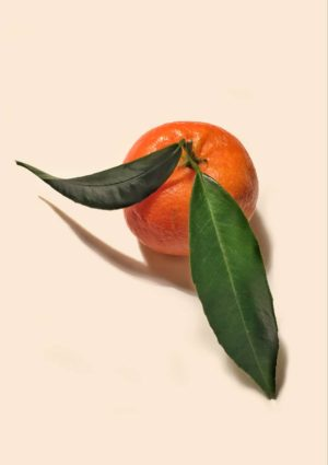 A greeting card for every day featuring a clementine with two long green leaves