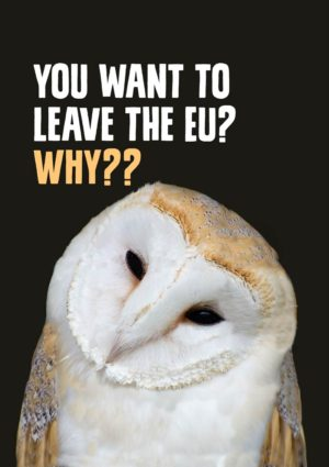 A satirical 'Owl' Anti-Brexit Greeting Card to support the No Brexit, anti-Brexit movement, featuring a wise owl asking the question 'You want to leave the EU?, Why?'
