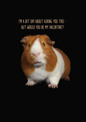 Shy Valentine's Day Card with a butterscotch and white guinea pig against a black background and text in orange that reads I'm a bit shy about asking you this - but would you be my valentine?