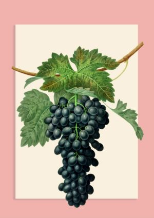 framed print with bunch of black grapes against a cream background set against a pink background