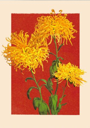 Chrysanthemum poster with golden florets of the flower set against a red background