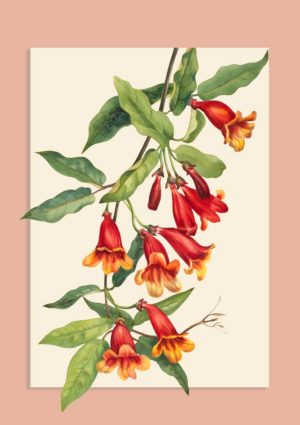 Crossvine poster. The vine is native to the United States and covers the shrubs and trees on which it grows by its tendrils.